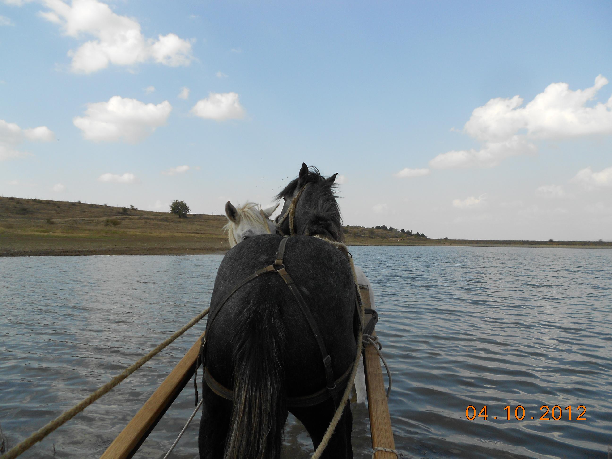 лошади, путешествия, Крым