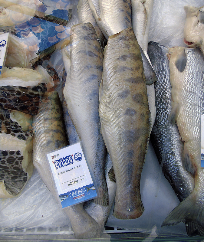 рыба La Maree La_Maree2_sudak1_aB