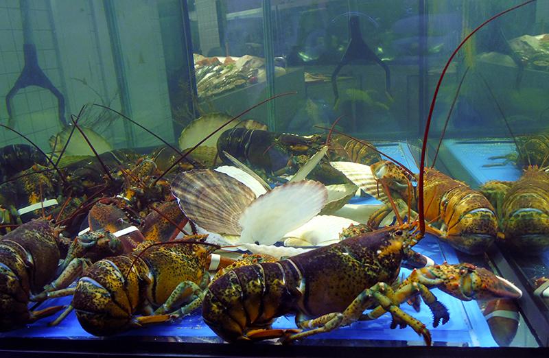 aquarium3_hommarus1A+_aB