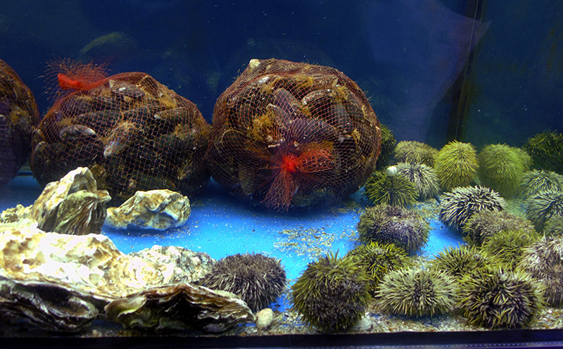 aquarium1_midii_i_ezhi1A+_zatemn57_contrast24_aB