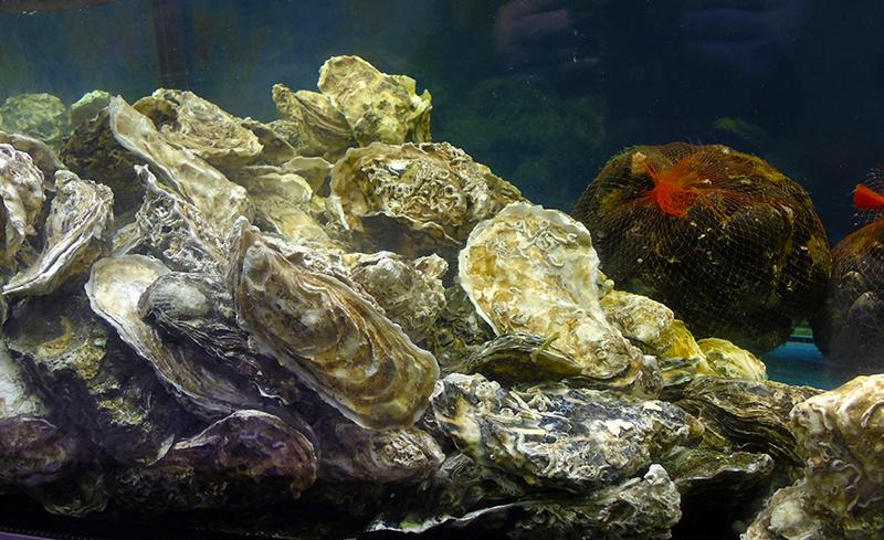 aquarium2_oysters1_zatemn40_contrast22_aB