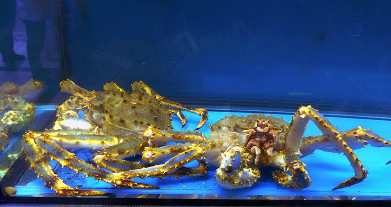 aquarium4_crabs1A+_zatemn64_contrast22_aB