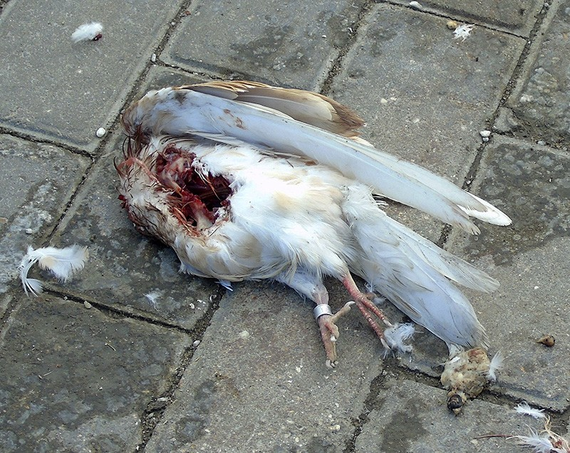 golub_dead1D+_aB