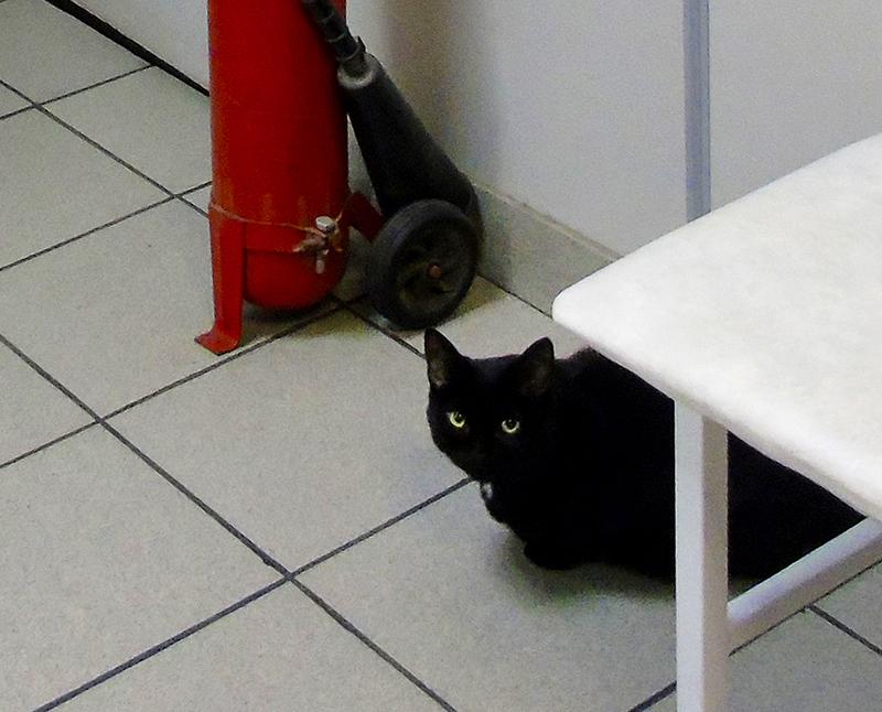 black_cat1A+_vlevo_cat_osvet_1_osvet_aB