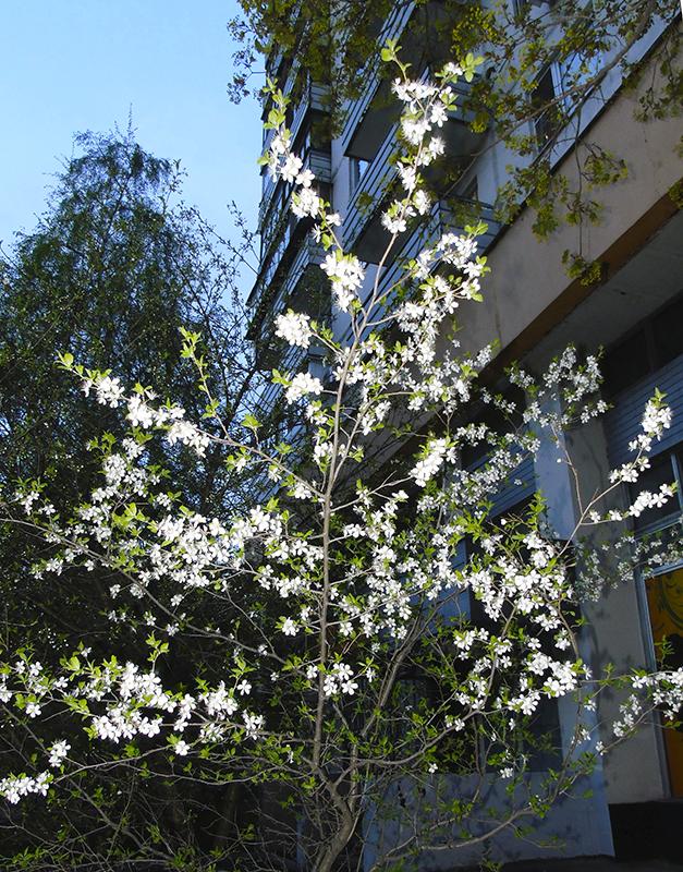 tree2_flowers1B+_aB