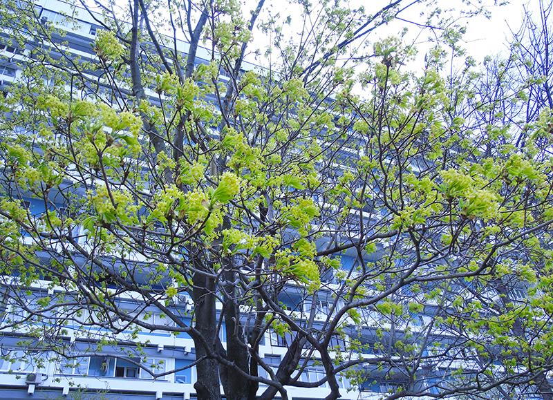 tree1A+_aB