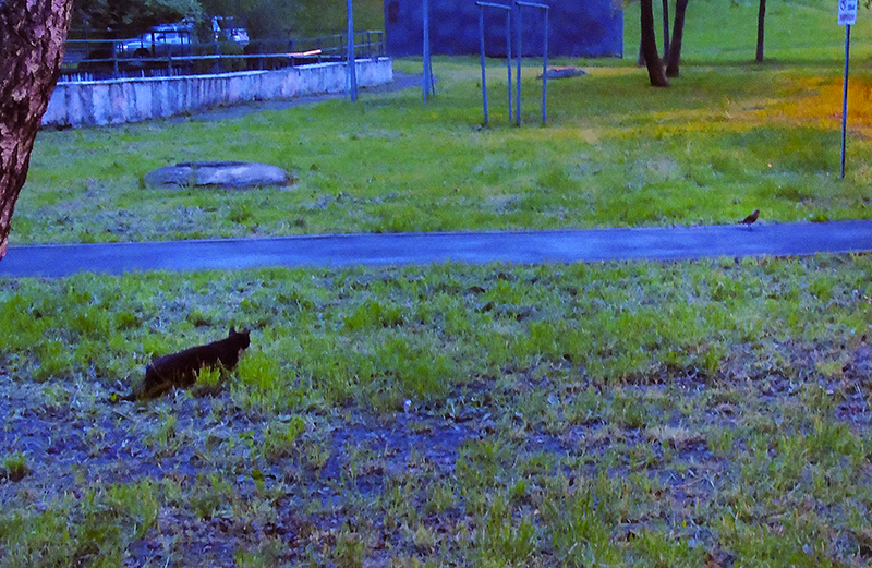 cat_i_bird1_osvet_rezko_autocolour_aB