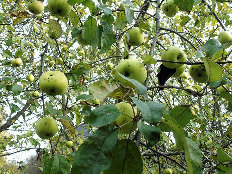 apples2A+_aB