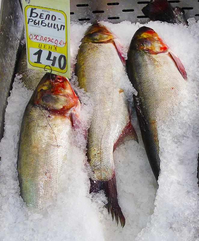 Неправильные названия рыб на нашем рынке 15_tolstolob2_as_belorybic1A_edit_aB