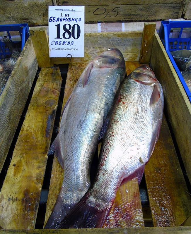 Неправильные названия рыб на нашем рынке tolstolob_as_belorybica1A+_aB