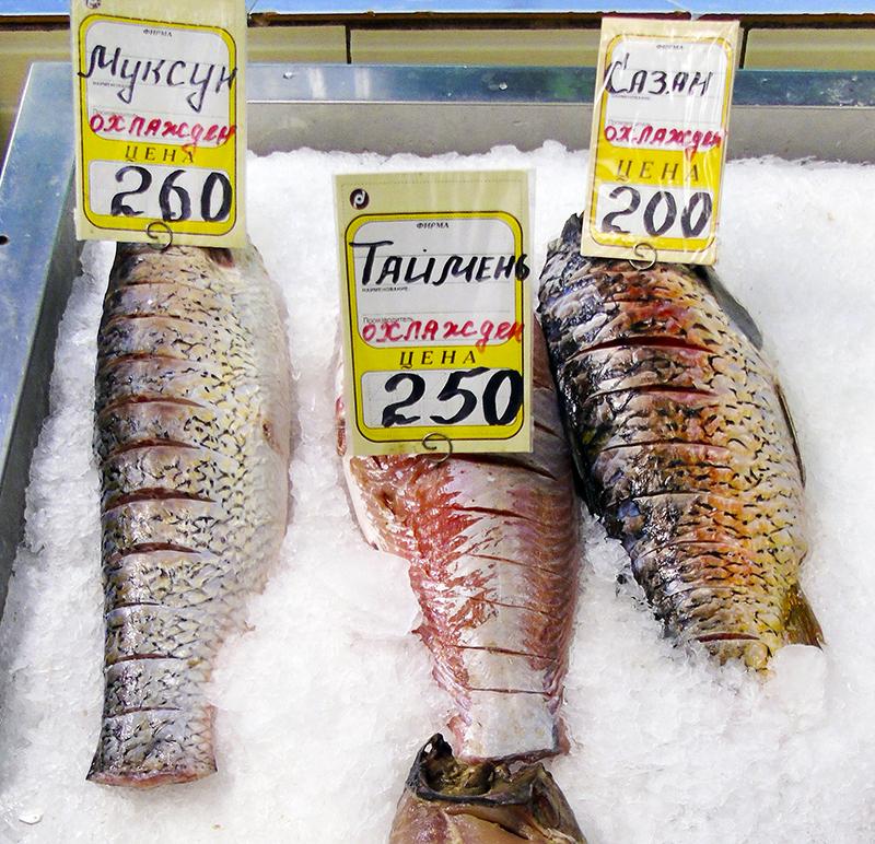 Неправильные названия рыб на нашем рынке 17_tolstolob3_as_muxun1_i_pangassius_as_taimen1_edit_aB