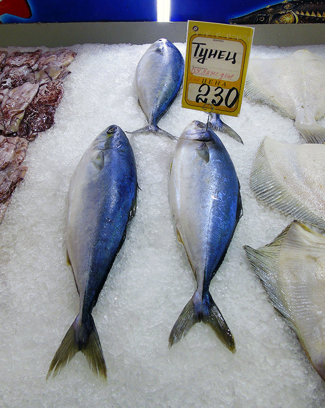 Неправильные названия рыб на нашем рынке 18A_zheltohvost_as_thuna1_1aB