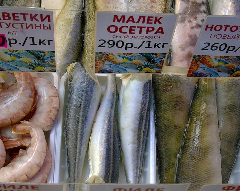 trigla_as_malek_osetra1_1aB