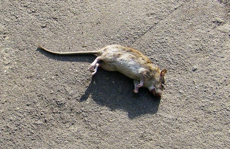 rat2C+_aB