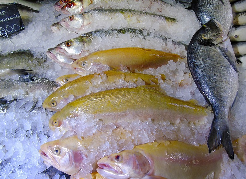 forel_gold1_aB