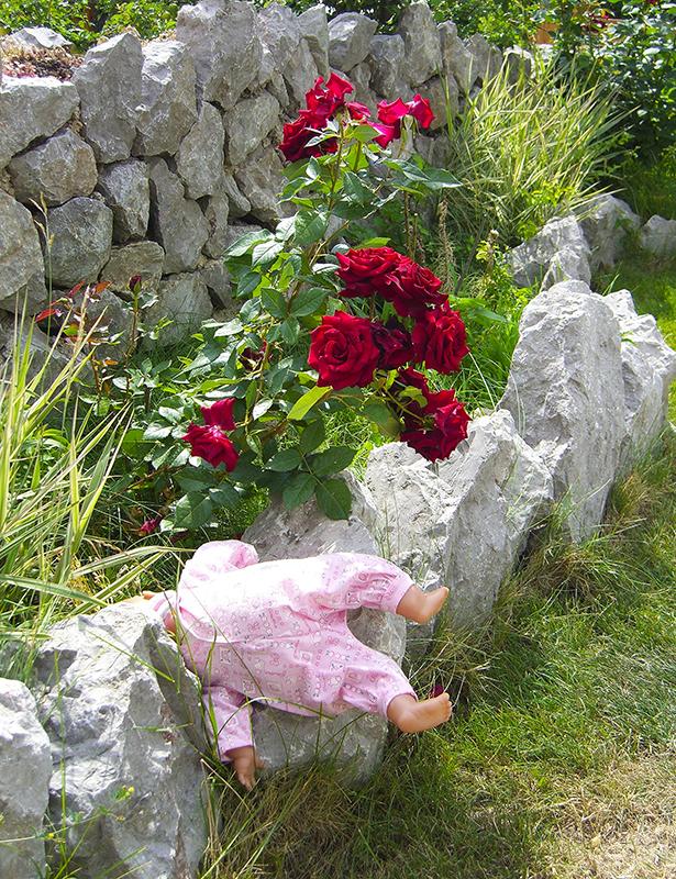 roses_i_pups1D_aB