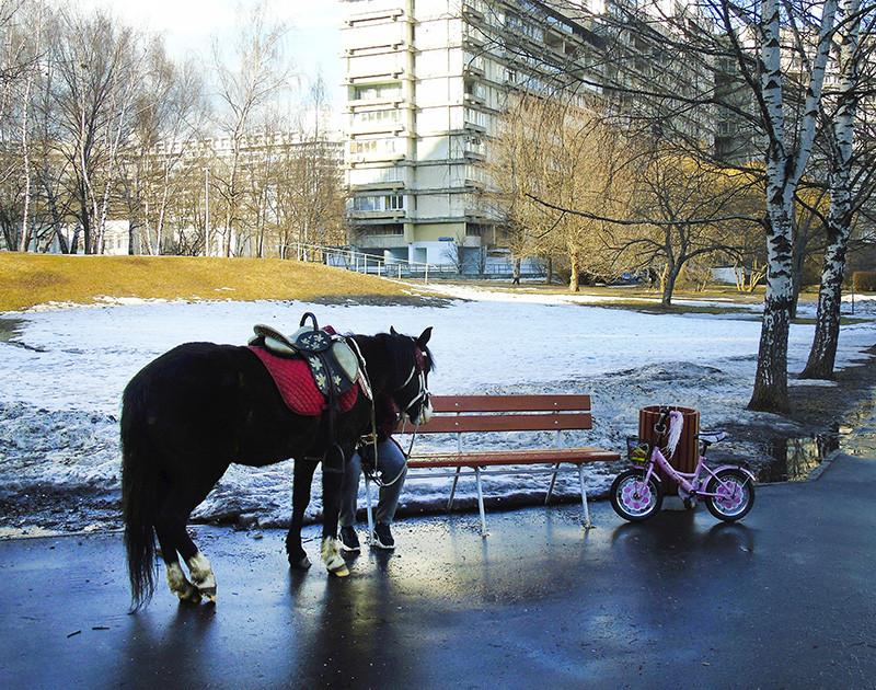 horse1G+_osv_aB