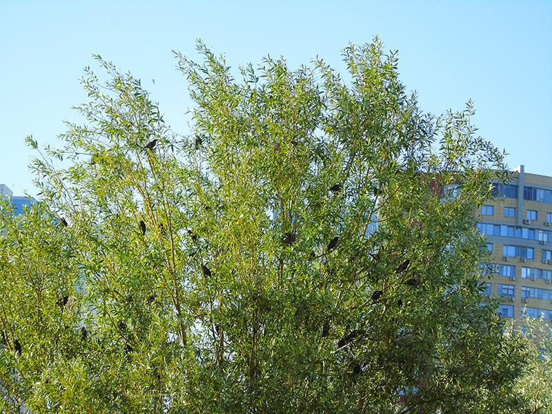birds_v_listve1A+_aB