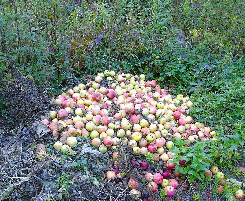 apples_kucha1A+_aB