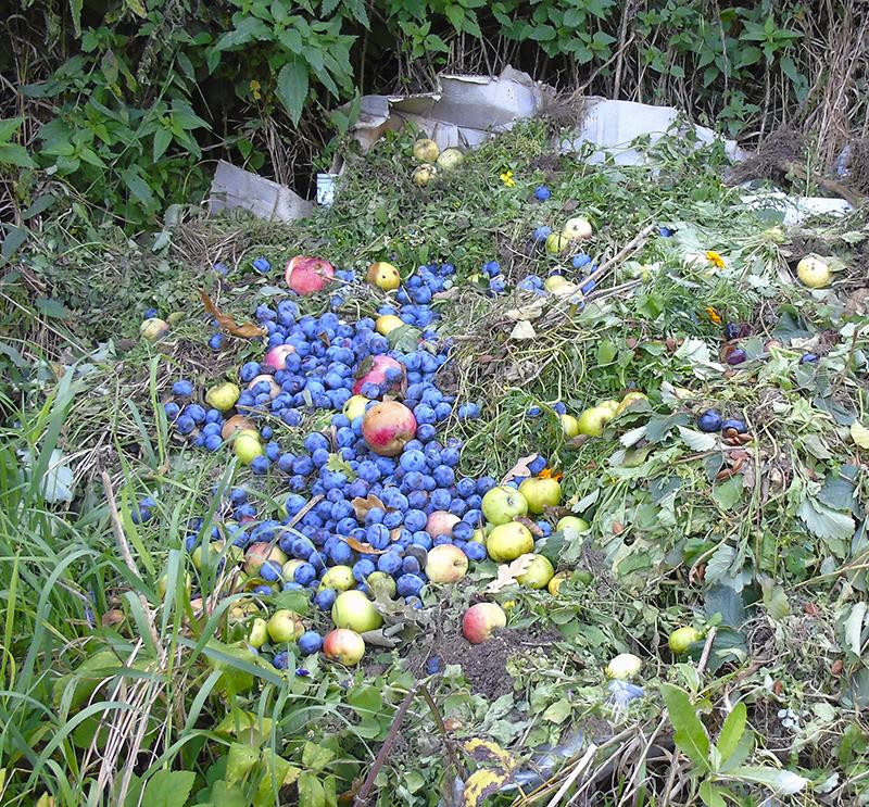 apples_kucha3_i_torn1B+_aB