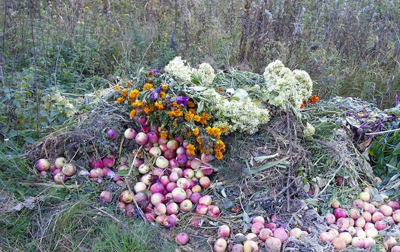 apples_kucha4A+_1aB