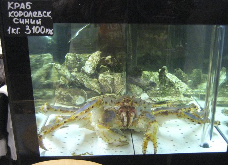 crab1_king_blue1_aquarium1_aB