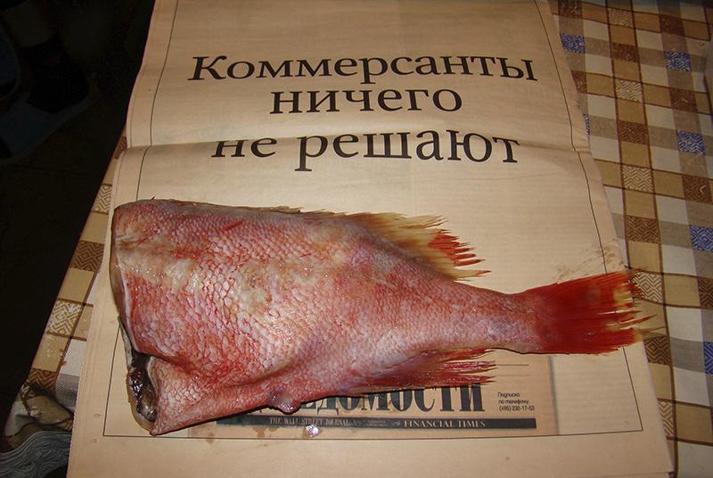 tushka_na_gazete1A_contrast18_rezk_aB