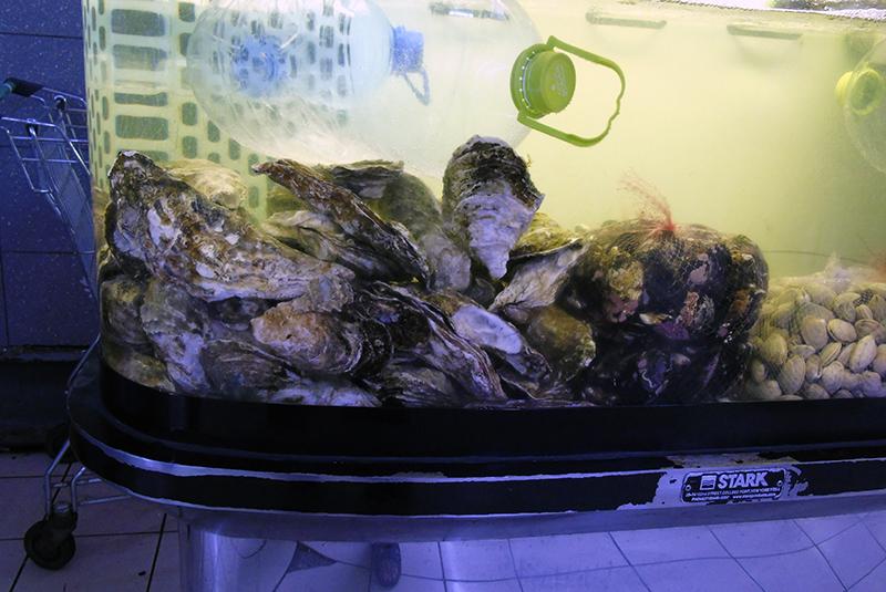 midii1_aquarium1_aB