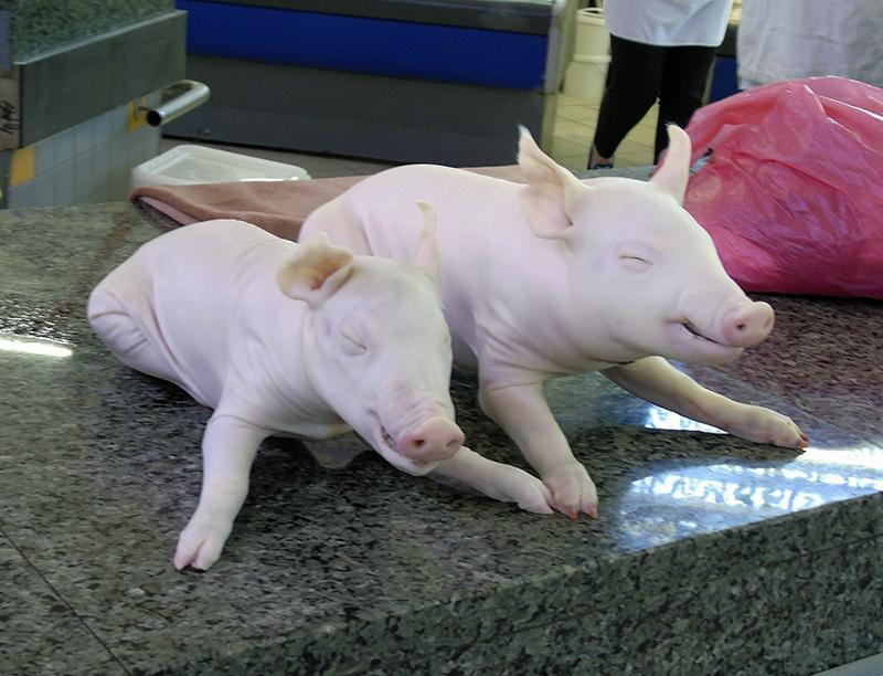 piglets2A_aB