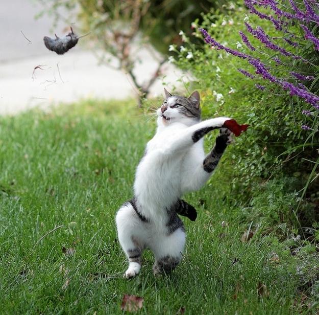 мышь летяющая