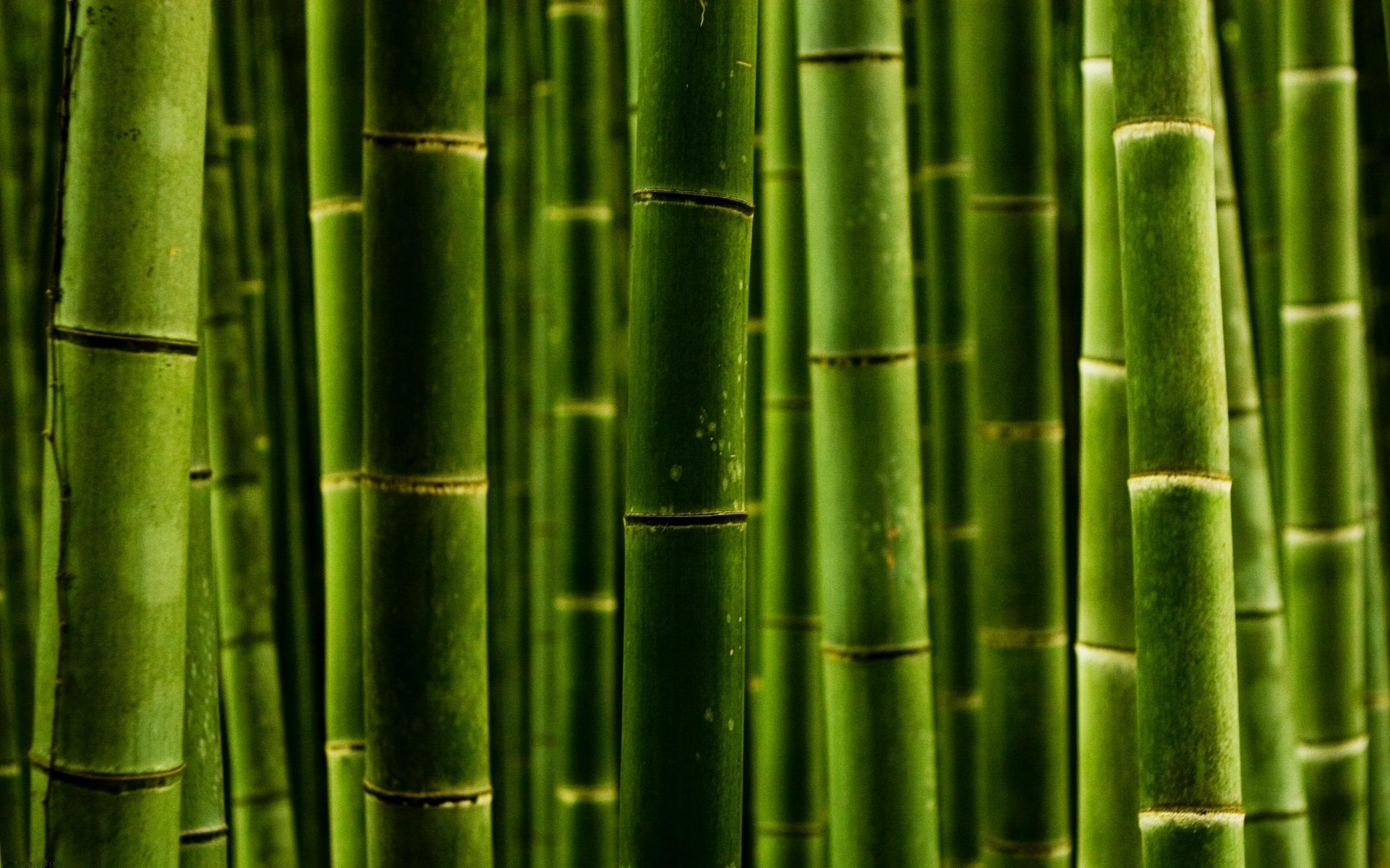 oboi-pod-bambuk