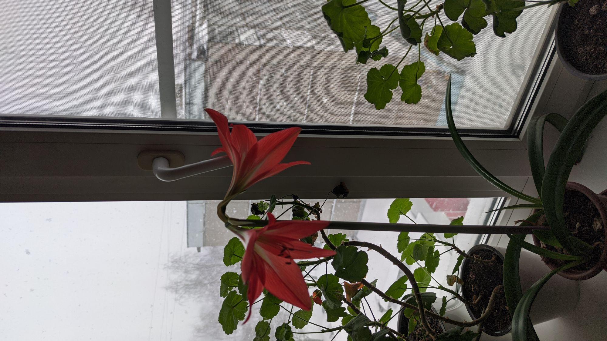 Цветок и снег