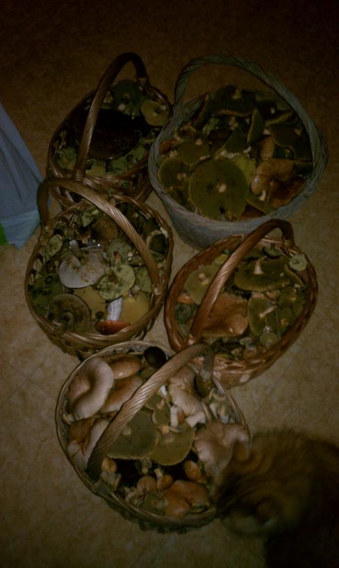 mushroom_2209_5