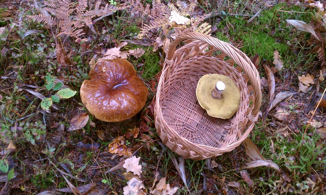 mushroom_2209_2