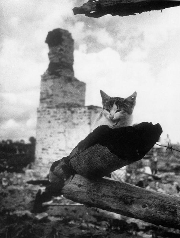 К годовщине 22 июня. Кошка с простреленным ухом