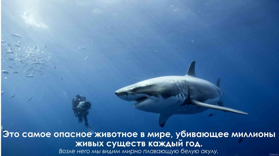 2173_belayaya-a1