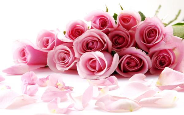 roses-04