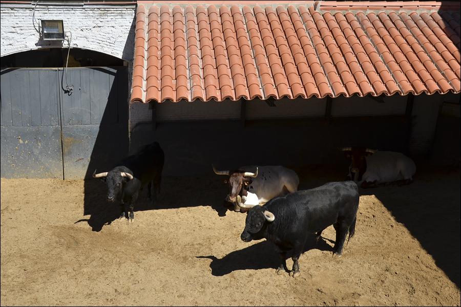 Las Ventas_0192