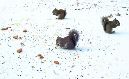 squirrels partying down!