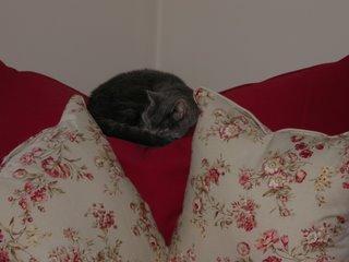 ella snoozing