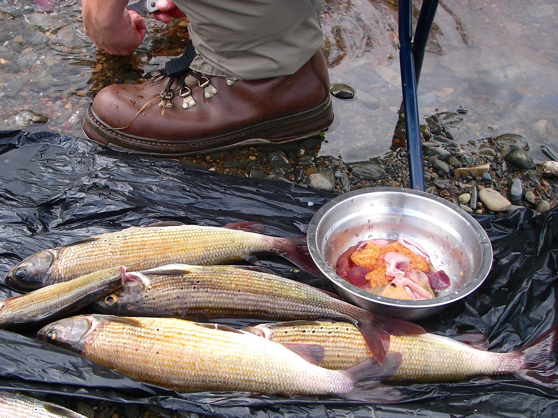 рыбалка в красноярском крае на большой пите реке
