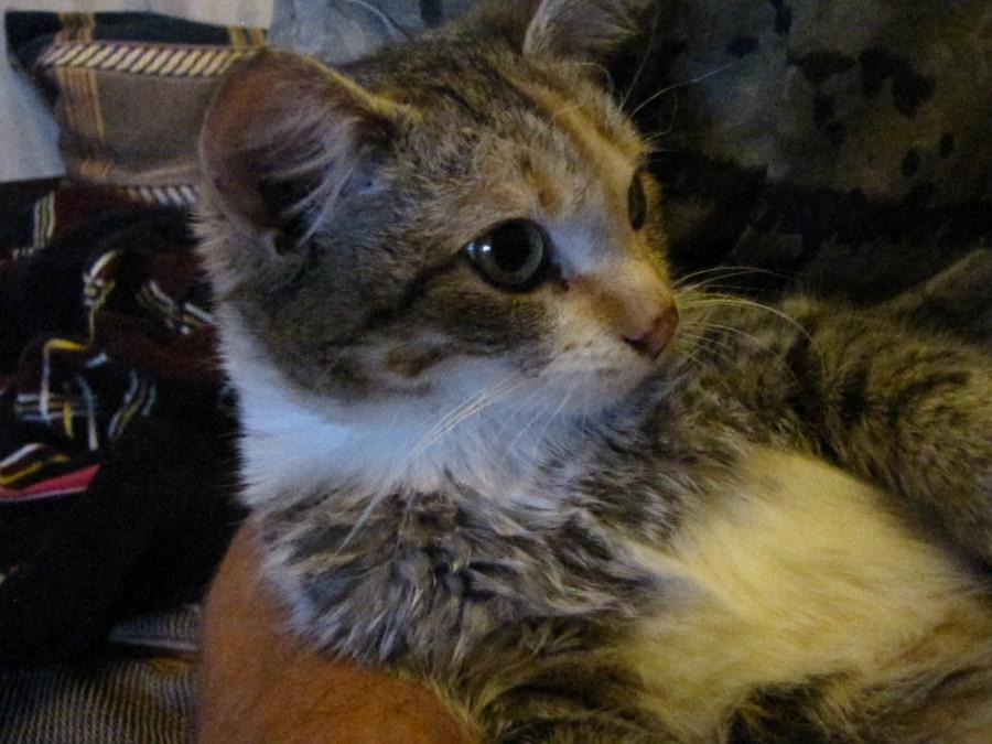 Нашу новую кошку зовут Наглёж