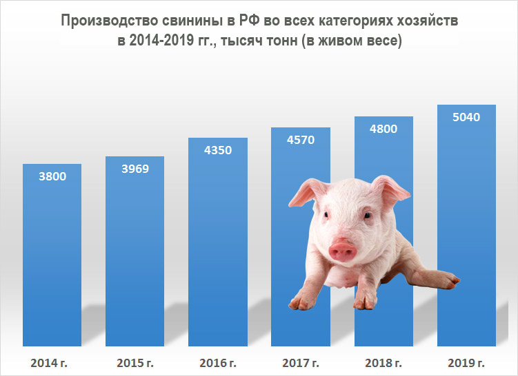 Производство свиней в России в 2019 году увеличилось на 5,1%