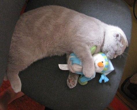 Шила спит