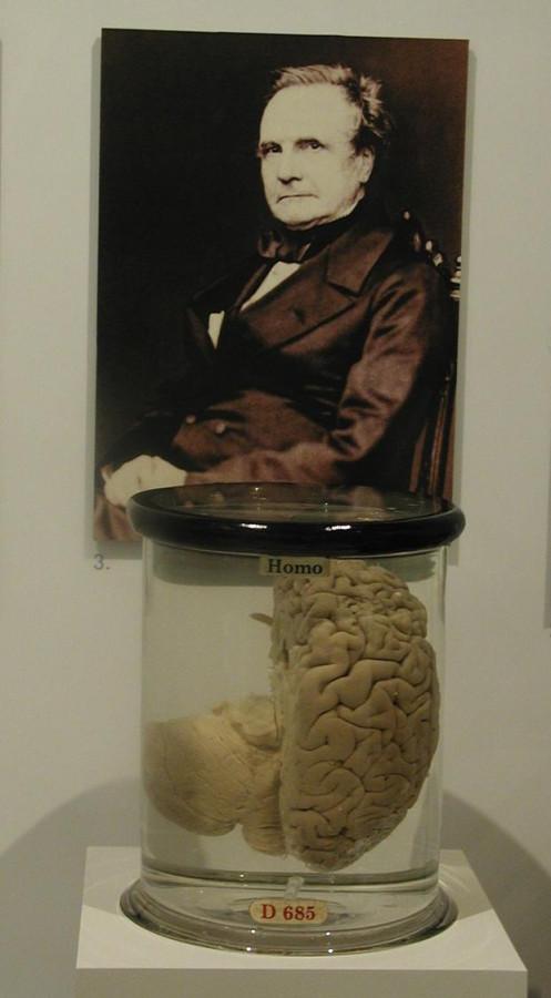 Картинка и видео дня: мозг Чарльза Бэббиджа
