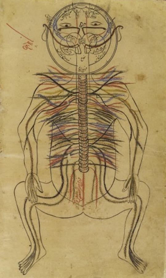 Картинка дня: нервная система от Авиценны