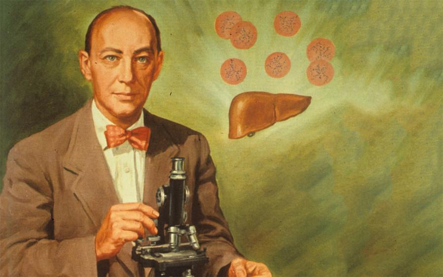 Нобелевские лауреаты: Джордж Майнот. Как печень стала лекарством
