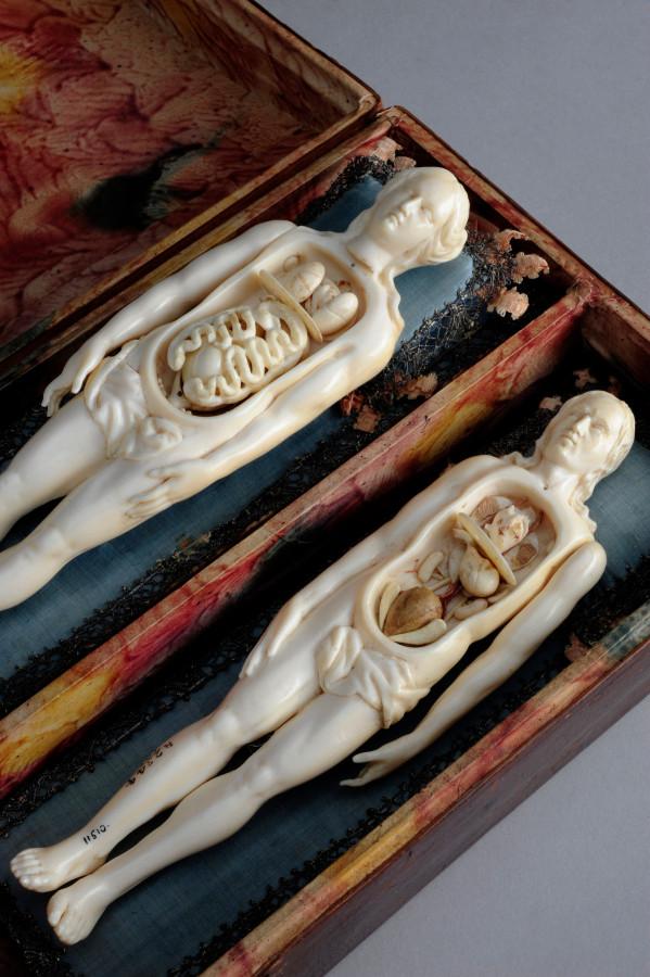 Картинка дня: костяные анатомические фигурки