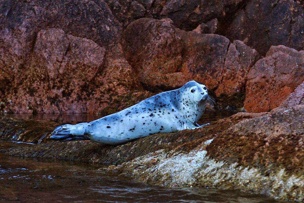 фото морских животных прим края собрали