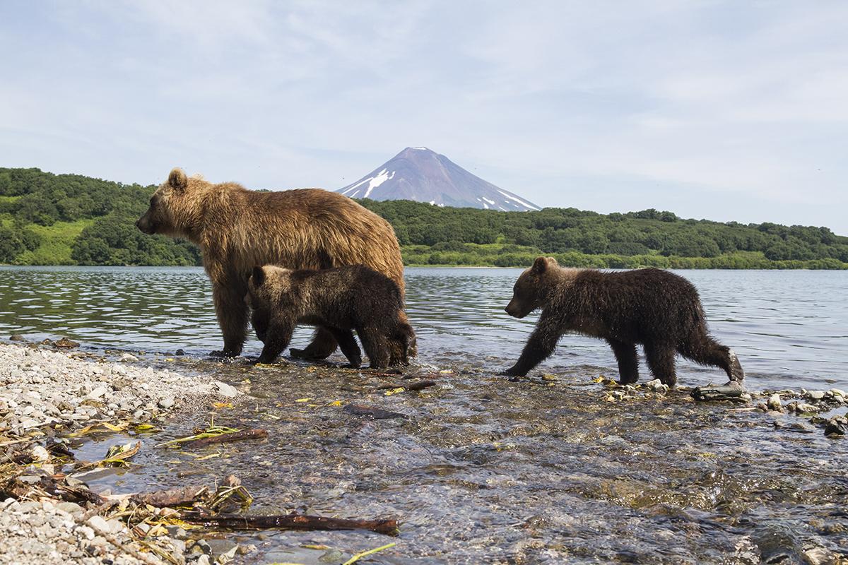 картинки камчатский медведь шабакахо обуна шавед